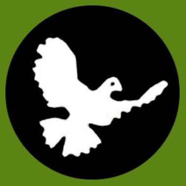 bf07 Taube schwarz