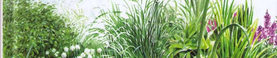Lebensraum Gartenteich Pala